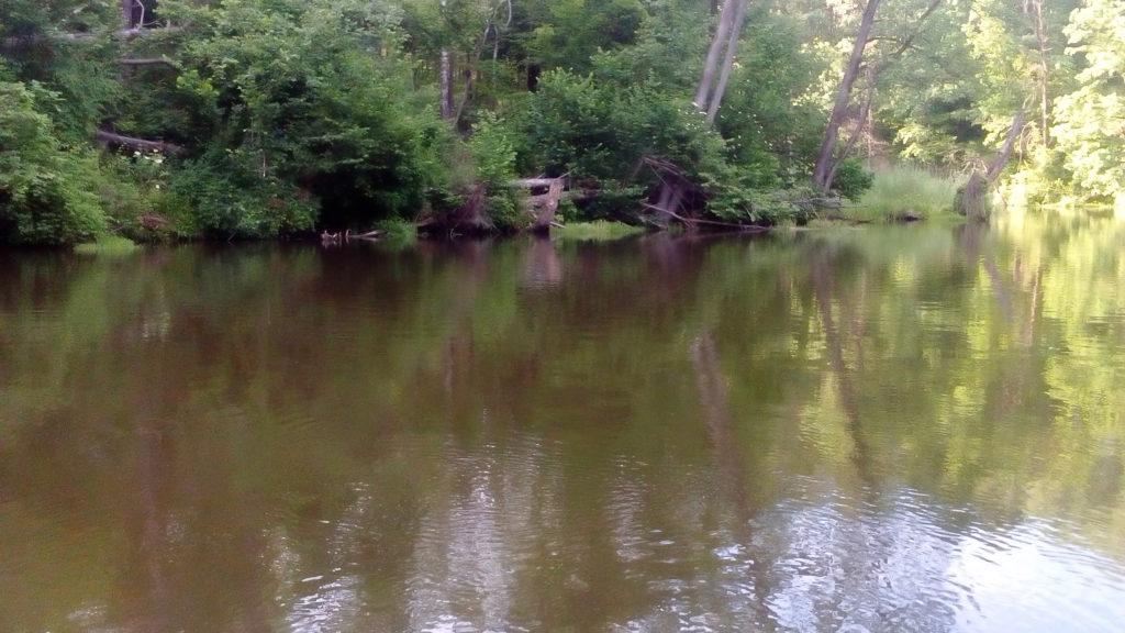 Rzeka Łyna i klenie